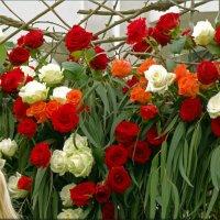 Фестиваль цветов в Сочи... :: СветЛана D