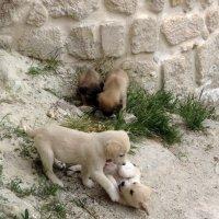 Милые собачки :: Наталья Джикидзе (Берёзина)