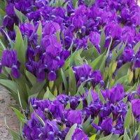 много цветов :: Максим Мальцев