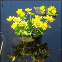 И на болоте праздник :: victor leinonen