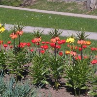 Весенние цветы :: Mariya laimite