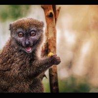 Где-то в Лемурляндии...Мадагаскар! :: Александр Вивчарик