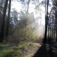 Утро в лесу :: Сергей Гвоздев