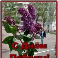 С великим праздником - Днём Победы, дорогие друзья! :: Нина Корешкова