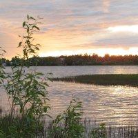 Архангельск, Озеро в Катунино 2015 :: Ирина Кузина