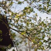 ...цветение... :: Андрей Гр