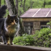 Лесной котейка :: Katerina Sheglova