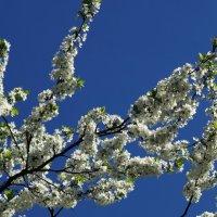 Весенний цвет неба :: Андрей Зайцев