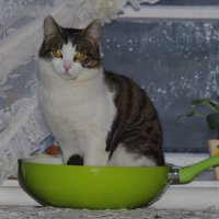 запеканка из кота.... :: Ксения смирнова