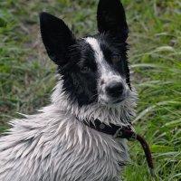 Портрет после купания...(а нечего грязным ходить) :: владимир