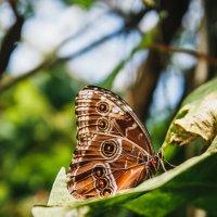 Выставка бабочек в Ботаническом саду Праги :: Алексей Морозов