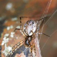 паук :: Мария Ставцева