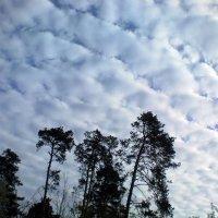 Небо над питомником-1 :: Сергей Гвоздев