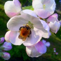 жужа в цветущем саду :: Александр Прокудин