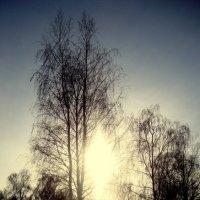 Зимнее сияние. :: Александр