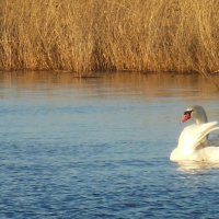 утро на озере с королем птиц :: игорь