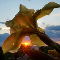 На закате. :: Надежда