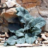 Горные растения :: Gudret Aghayev