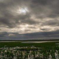 Затухающее озеро :: Денис Гладких