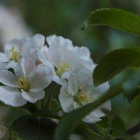 Весна! :: Ирина Куликова