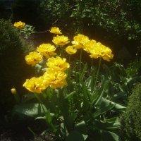 Жёлтые цветочки :: Tarka