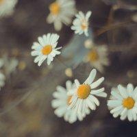 flowers2 :: Анастасия Фролова