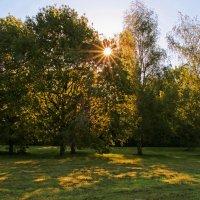 Солнечное утро :: Alexander Andronik