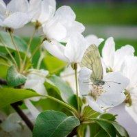 Ах,весна! :: Анна Печкурова
