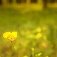 Солнечный цветок :: Андрей Михайлин