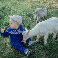 маленький пастух :: ольга солнцева