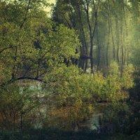 Где-то в лесу... :: Yulia Demina