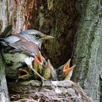 Детки, осторожней, можете выпасть из гнезда.. :: Ната Волга