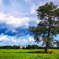 Природа Литвы :: Vsevolod Boicenka