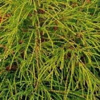 зеленые ветки без листьев :: Александр Прокудин
