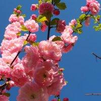 весна :: Лариса Батурова