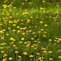 Вот и весна :: Евгений Анисимов