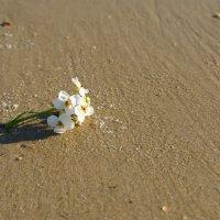 цветок на песке :: Iryna K