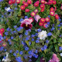 Мозаика весны... :: Алёна Савина