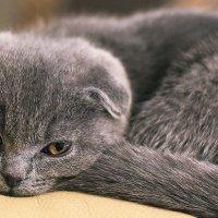 Кошечка Люся. :: юрий Амосов