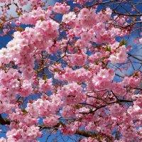 Под розовым небом :: Swetlana V