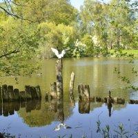 Старый пруд :: Анастасия Меркулова