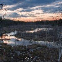 Закат на Томском болоте :: Владимир Belov