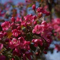 многоцветие :: Ярослава Бакуняева