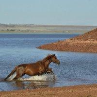 Купание коня :: Ольга Слободянюк