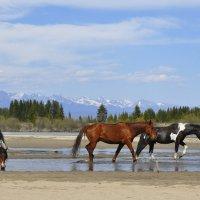 Лошади на фоне гор (Саяны) :: Ольга Слободянюк