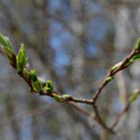 Весна :: Анна S