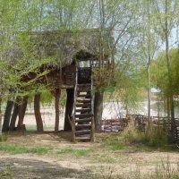 Дом на деревьях :: Андрей Солан