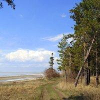 На берегу в апреле. :: Мила Бовкун
