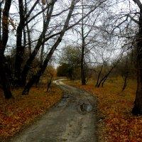 Осенняя дорога :: Сандра Гро