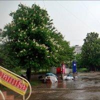 Майский дождик :: Нина Корешкова